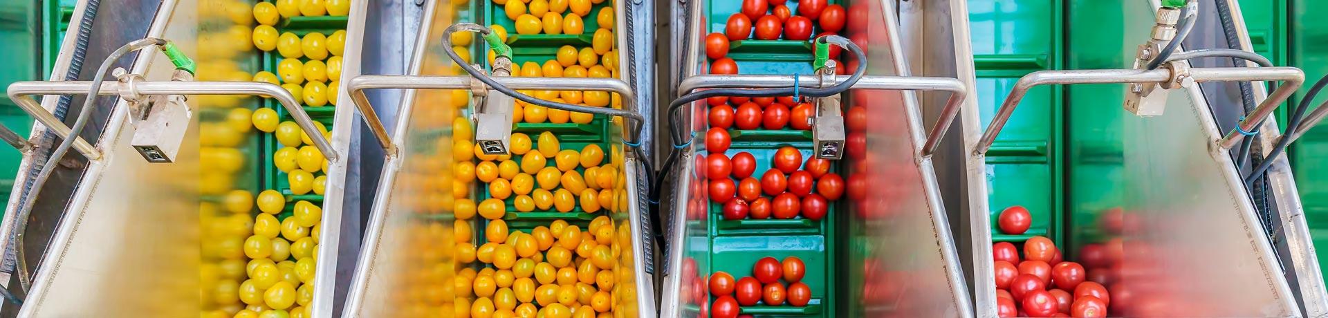 Machine à trier les fruits et légumes