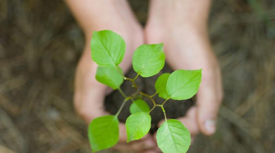 des mains remplies de terre avec une plante